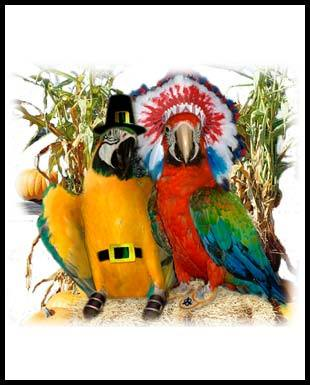 parrot-thanksgiving