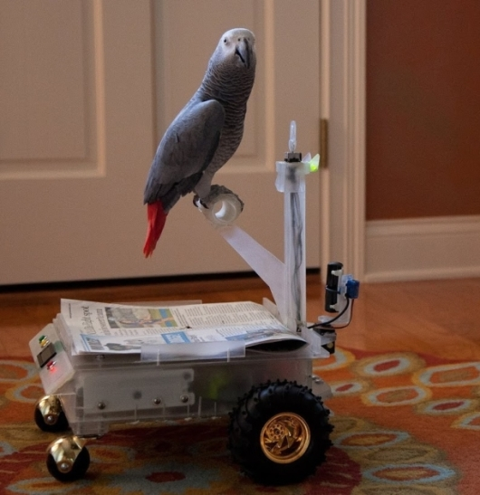This parrot doesn't fly -- it drives a buggy | Crave - CNET