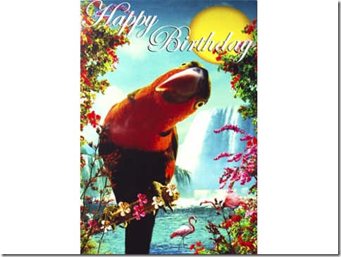 retro kitsch parrot birthday card t2-640x480